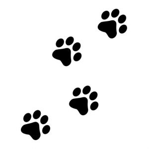 diseño tatuajes de gatos dibujos tattoo cat 24 300x300