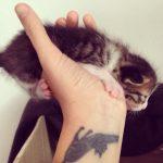 tatuajes de gatos en la muñeca gatitos 15 150x150