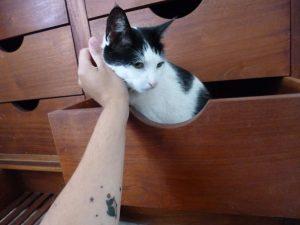 tatuajes de gatos pequeños mascotas felinos 23 300x225