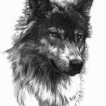 tatuajes lobos diseños 6 150x150