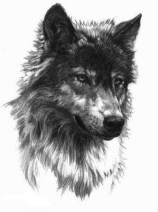 tatuajes-lobos-diseños (6)
