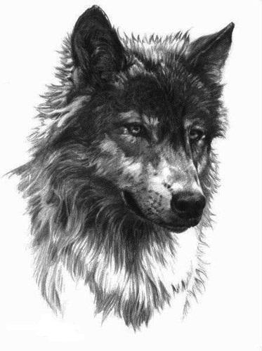tatuajes lobos diseños 6 - tatuajes de lobos