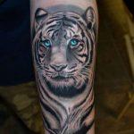 tatuajes tigres blancos 5 150x150