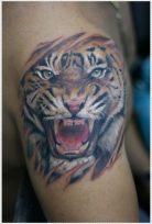 tatuajes-tigres-brazo-hombro (2)