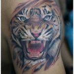 tatuajes tigres brazo hombro 2 150x150