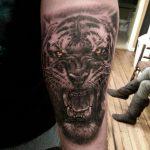 tatuajes tigres brazo hombro 3 150x150