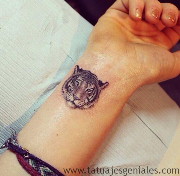 tatus diminutos gatos animales 2