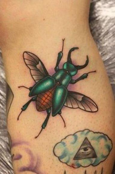 escarabajo 8 384x577