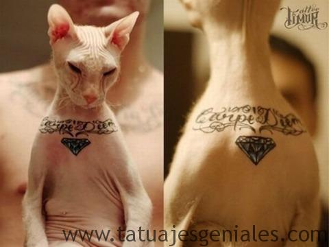 chats tatoués 1