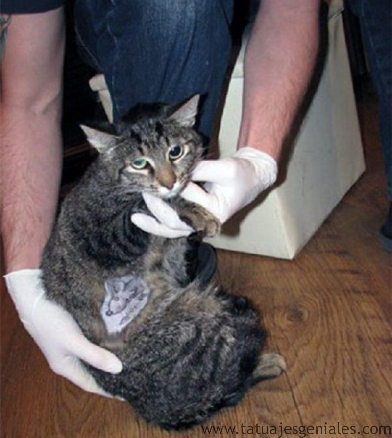 gatos tatuados 2