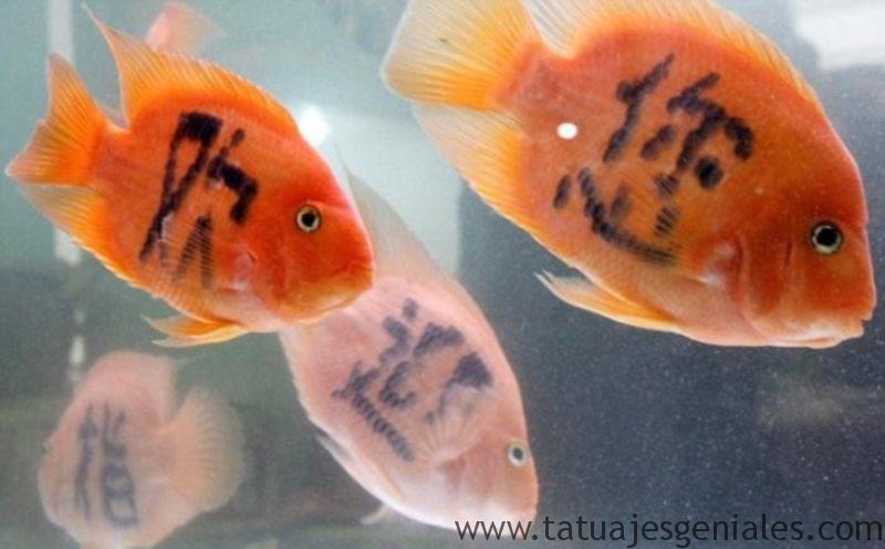 peces tatuados