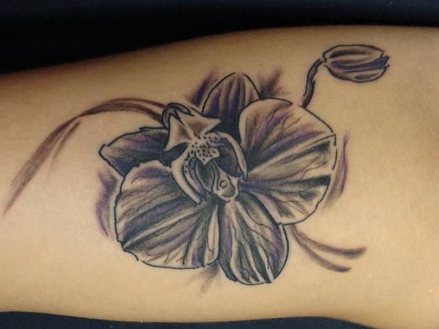 orquidea flores 7