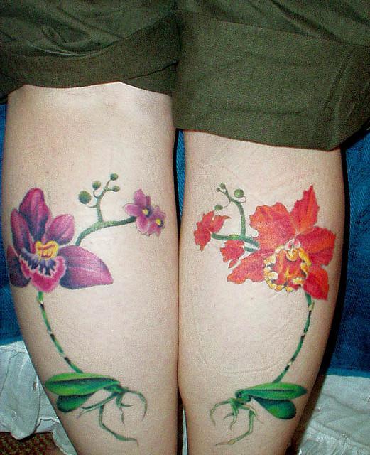 orquidea flores 8