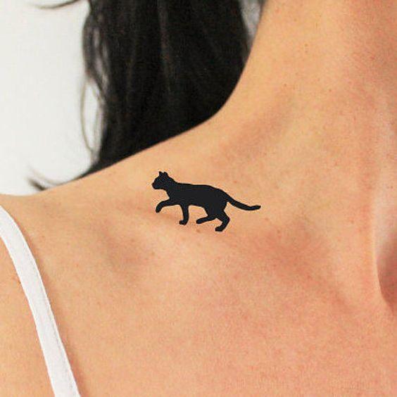 de gatos 7