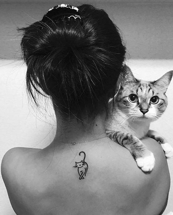 de gatos 8