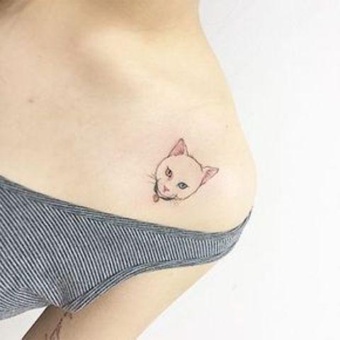 de gatos 9